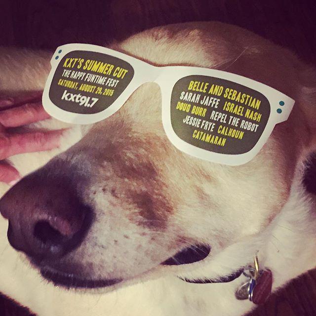 Summer Cut dog