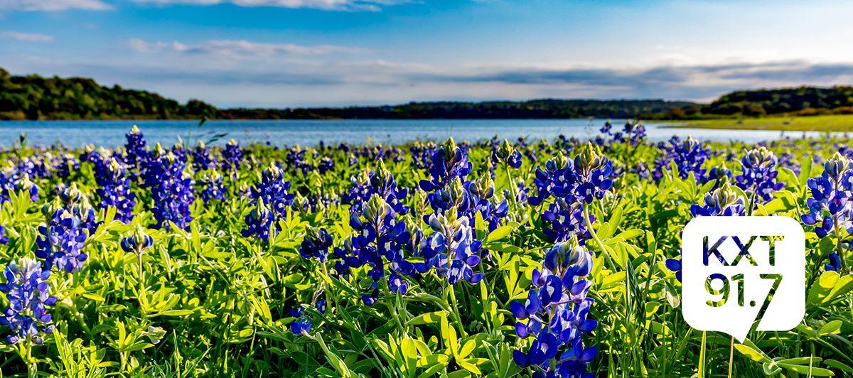 Photo of Lake Travis in Austin with bluebonnets